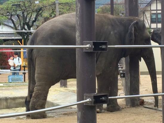 Tokuyama Zoo: スリランカからやってきた
