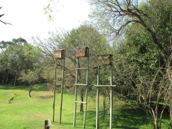 Ngwenya Lodge : Even the Bats have their own hotel at Ngwenya