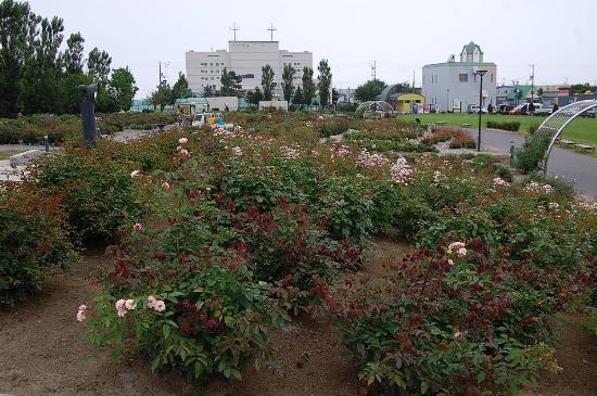 Haboro Rose Garden: 手入れが行き届いています。
