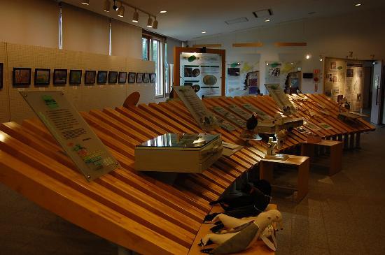 Hokkaido Seabird Center: わかりやすい展示です。