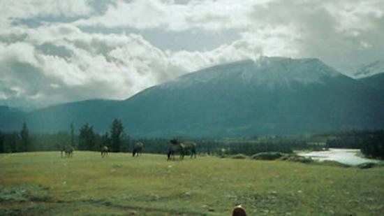White Wolf Inn : Scenic Views