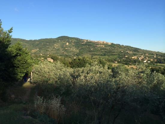 Margherita Holiday Home : View of Cortona from the villa
