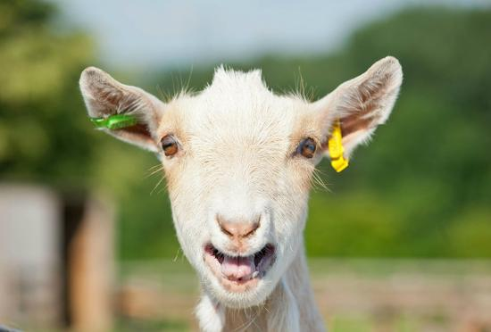 Lee Valley Park Farms: Say hello to all our residents!