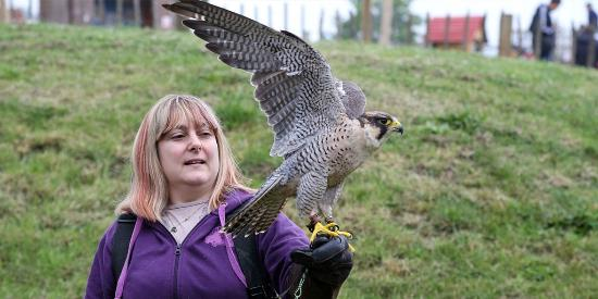 Lee Valley Park Farms: Watch a bird of prey flying display