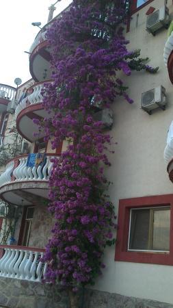 """Hotel Pansion Bogumila: Piękne pnącza na froncie """"Bogumily"""""""