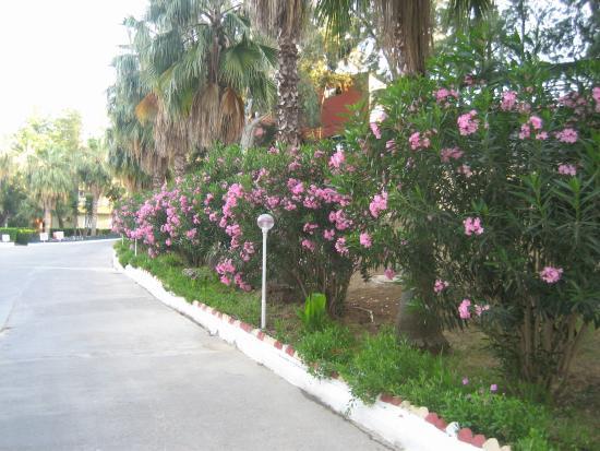 Club Sidelya Hotel: территория