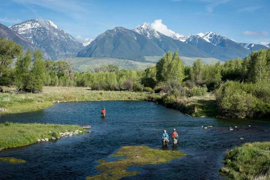 Montana anglers delivers madison river brown trout for Bozeman mt fly fishing