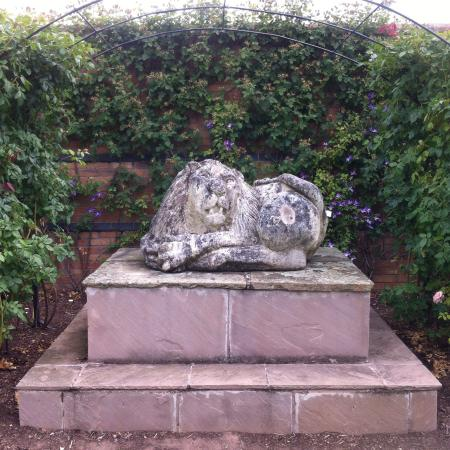 Lion Garden Picture of David Austin Roses Wolverhampton