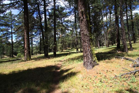 Laguna Mountain Lodge: About 2 mile hike from cabin