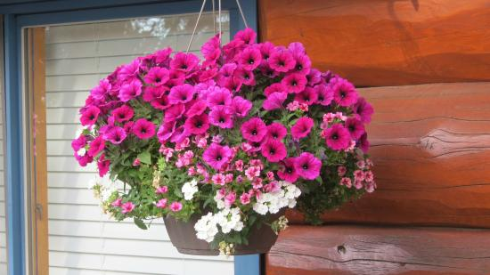 Juniper Acres Bed and Breakfast: flowers on the front deck