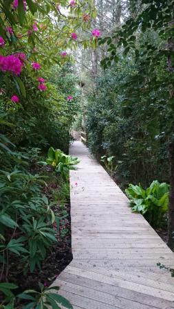 Campile, Irlanda: the woodland garden board walk