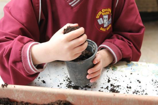 Campile, Irlandia: school tours at kilmokea