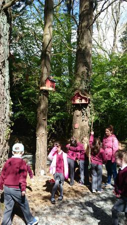 Campile, Irlandia: enjoying the fairy village
