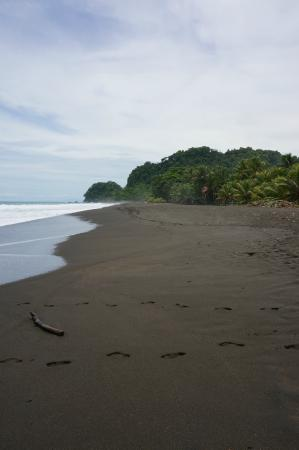 Sandpiper Hotel : view from right outside hotel.  most beautiful black sand beach!