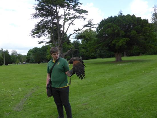 Dalhousie Castle Falconry Our Falcon Flew To Gareth