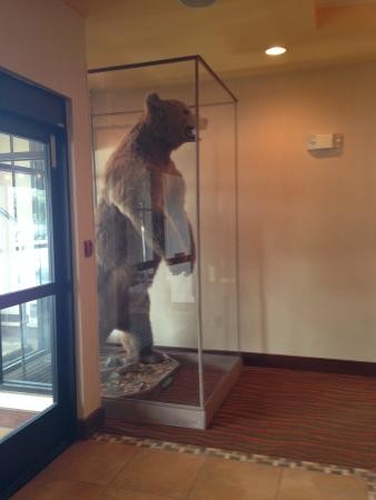 Homewood Suites by Hilton Anchorage : Cool!  (Not for the bear)