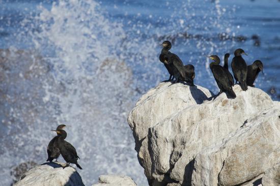 Gordon's Bay, แอฟริกาใต้: Kogelberg Nature Reserve minutes away