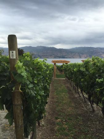 West Kelowna, แคนาดา: The vineyard at Quails' Gate
