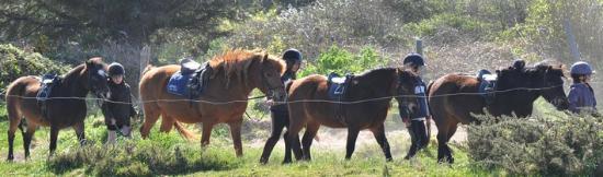 Centre Equestre de Feunteun Aod: balades et stages à poneys