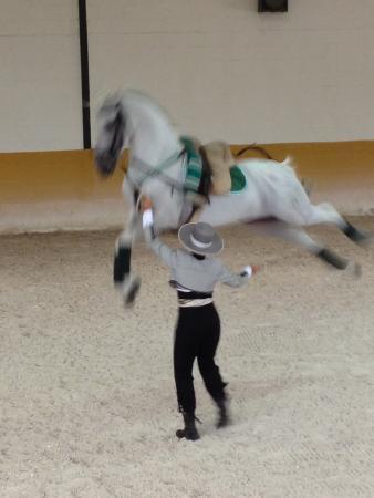 Centro de Equitacion El Ranchito: Amazing show !!!