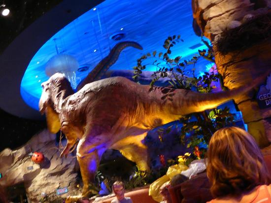 Bild von t rex orlando tripadvisor for T rex location