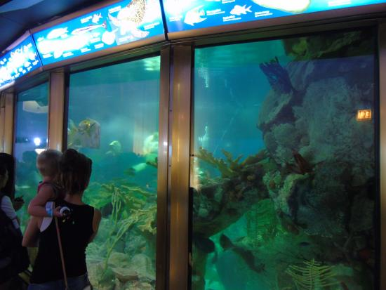 Gift Shops: Shedd Aquarium Gift Shops Best time to visit: Wednesday through Friday and mornings before 11am are least crowded. Arrive early for the best selection of show times for the aquatic presentation, which often sells out on busy days.