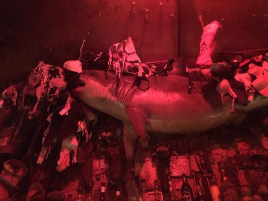 Hogs & Heifers (Downtown) : Акула