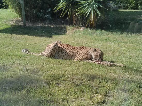 fotos jardim zoologico lisboa: Foto de Lisbon Zoo (Jardim Zoologico de Lisboa), Lisboa – TripAdvisor