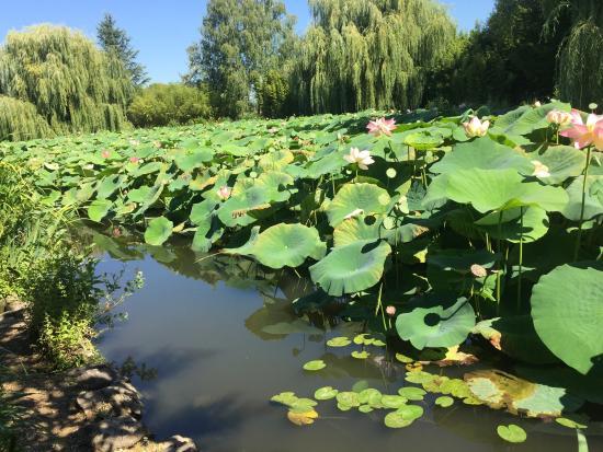 Les jardins aquatiques photo de les jardins aquatiques - Les jardins aquatiques saint didier sur chalaronne ...