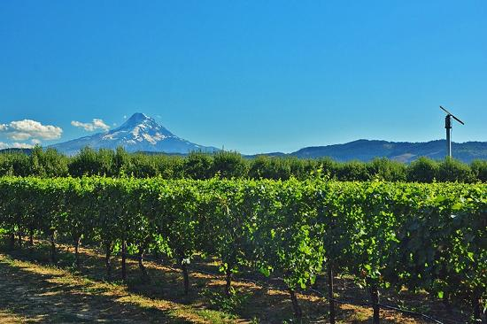 Hood River, OR: Orchard NE of Mt Hood