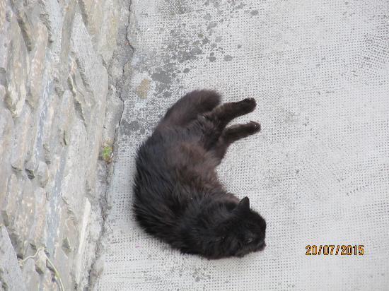 Hotel Crampon: Г-н Пилу, почтенный кот хозяйки ...
