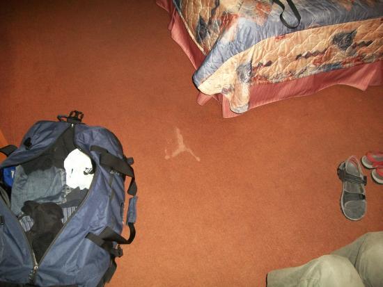 Motel Hauterive: Suspect stain on the orange carpet