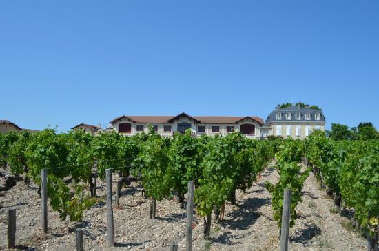 Bordeaux Saveurs : Touring the vineyards of Pontet Canet