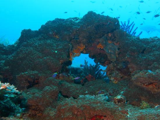 Uepi Island Resort: Morova Lagoon Sea-scape