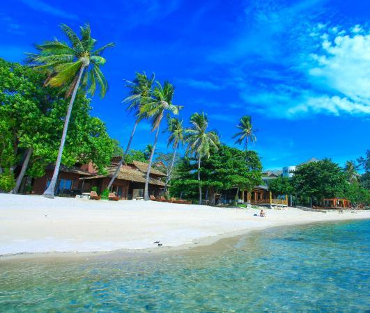 Koh Tao Beach Club: Beach Area