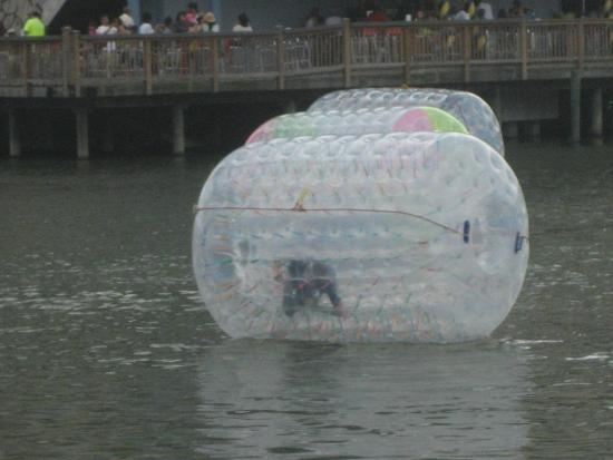Broadway At The Beach Human In A Hamster Ball