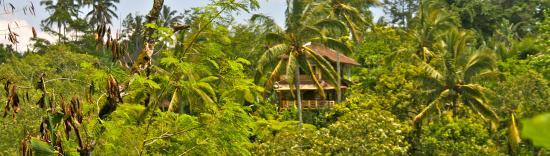 Sarinbuana Eco Lodge: Eco lodge