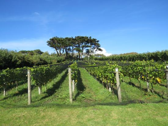 Holy Vale Wines