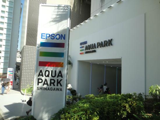 アシカ - Picture of Epson Aqua Park Shinagawa, Minato - TripAdvisor