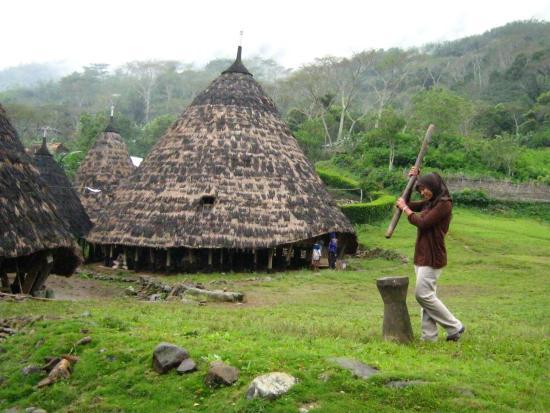"Ruteng, อินโดนีเซีย: cara hidup yang masih tradisional ""alat untuk menumbuk padi atau menumbuk kopi sebagai sajian ut"