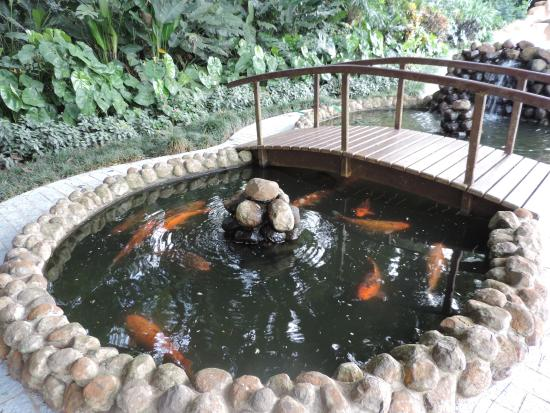 Foto de bourbon cataratas convention spa resort foz do for Pileta con peces