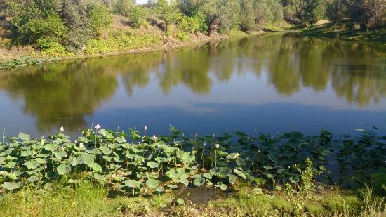 Volgograd Oblast, Russland: Волго-Ахтубинская пойма