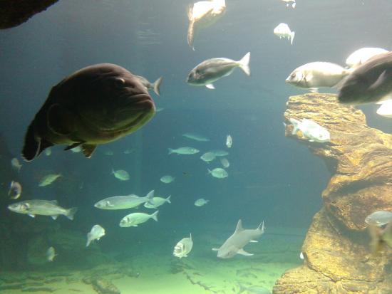 Acuario central detalle variedad de peces picture of for Variedad de peces