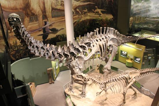 Sam Noble Oklahoma Museum of Natural History: Big dino bones