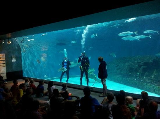 A diver doing q&a - Picture of North Carolina Aquarium on ...
