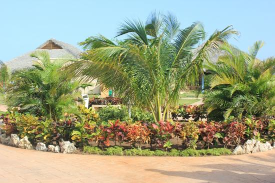 By the hotel picture of melia jardines del rey cayo for Jardines del rey