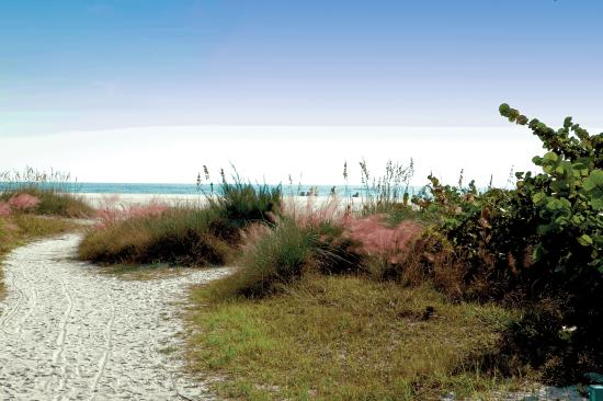 Siesta Key, FL: A sneak peek of the beach, which lies just beyond the dunes.
