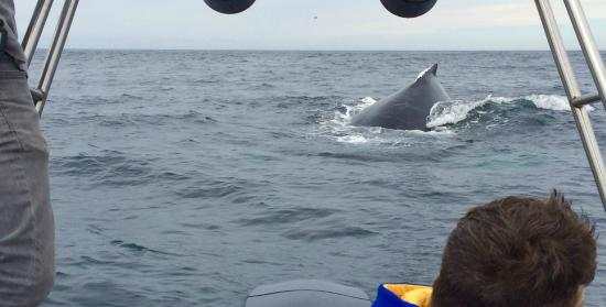 Avila Beach Boat Charters: humpback coming to check us out