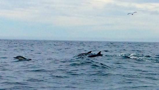 Avila Beach Boat Charters: dolphins were everywhere!