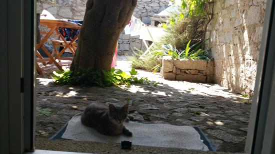 Resort Cava Francese: un tenero amico